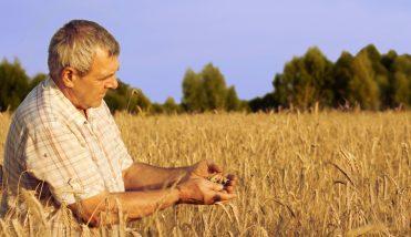 farmer_wheat